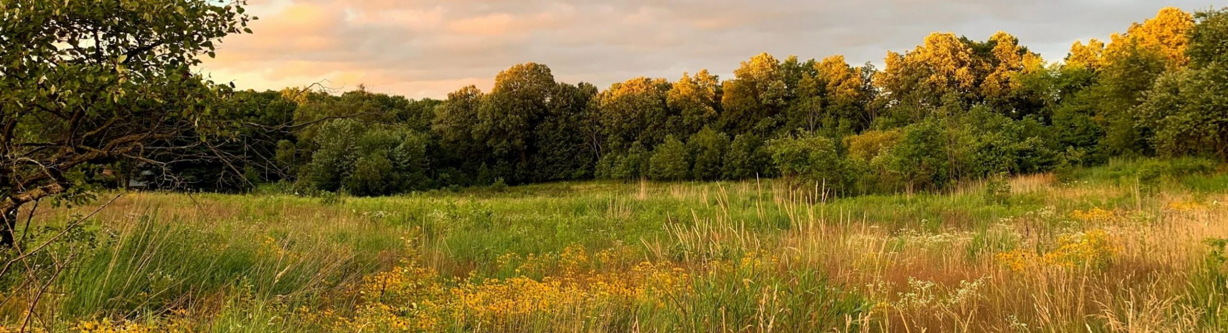 Friends of Greenview and Pioneer Woods Nature Areas